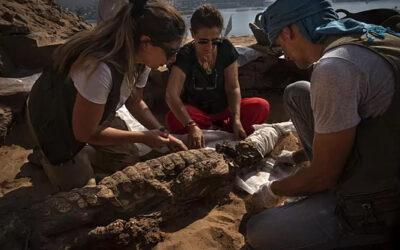 Construcciones Calderón apoya la nueva campaña de excavaciones de la UJA en Egipto, que ha descubierto 11 cocodrilos momificados